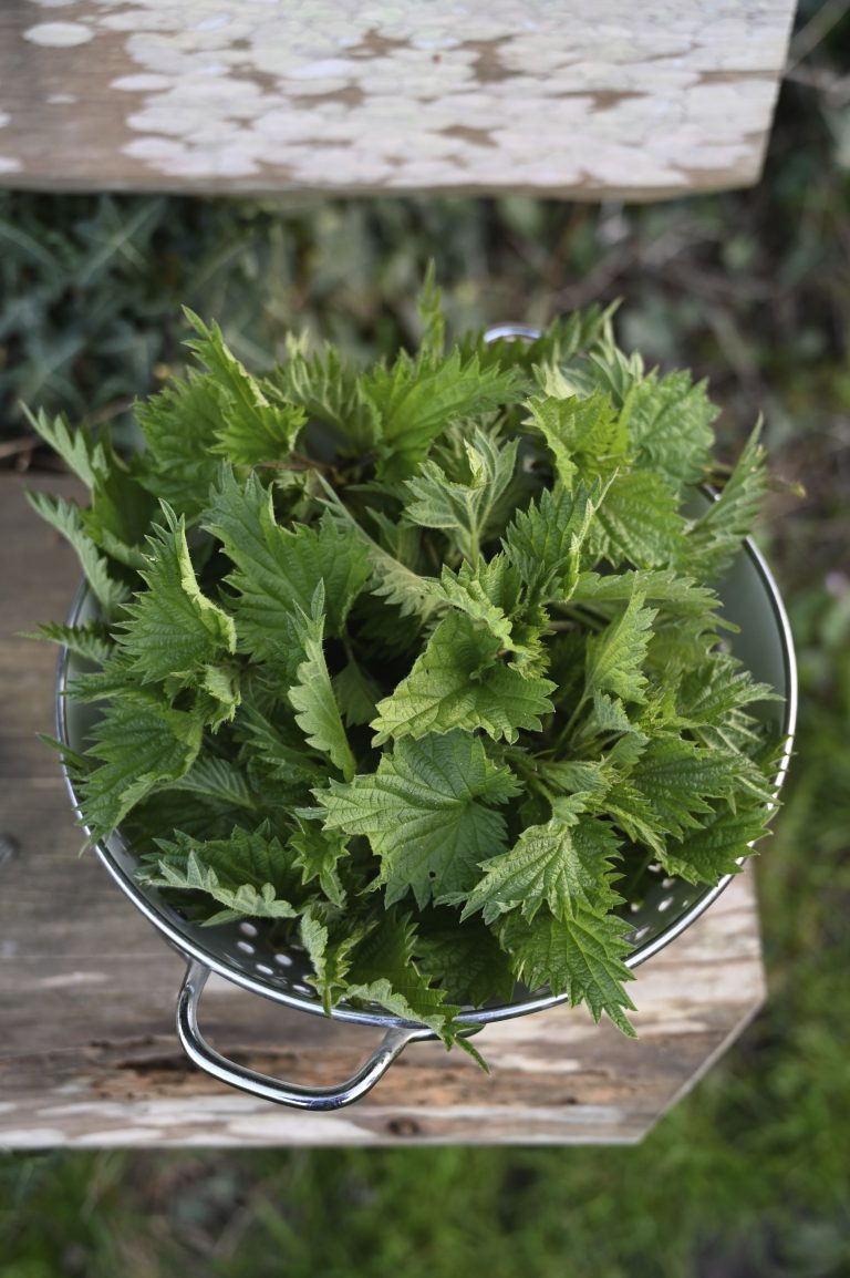 Foraged nettle soup